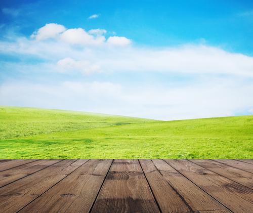 3 סוגי ריצופים שתוכלו ליהנות מהם כדק לבגינה
